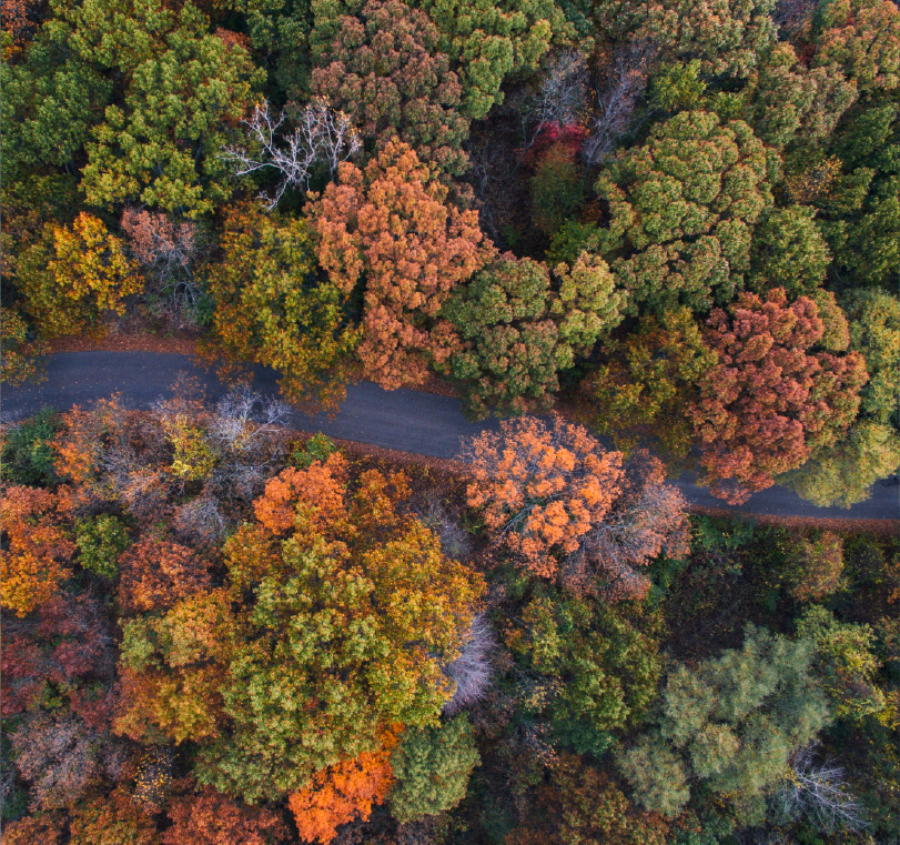Aerial view of road winding through a forest in fall.